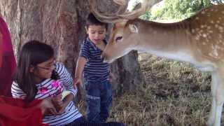 Shafi and Zahin at Bushi Park Surrey