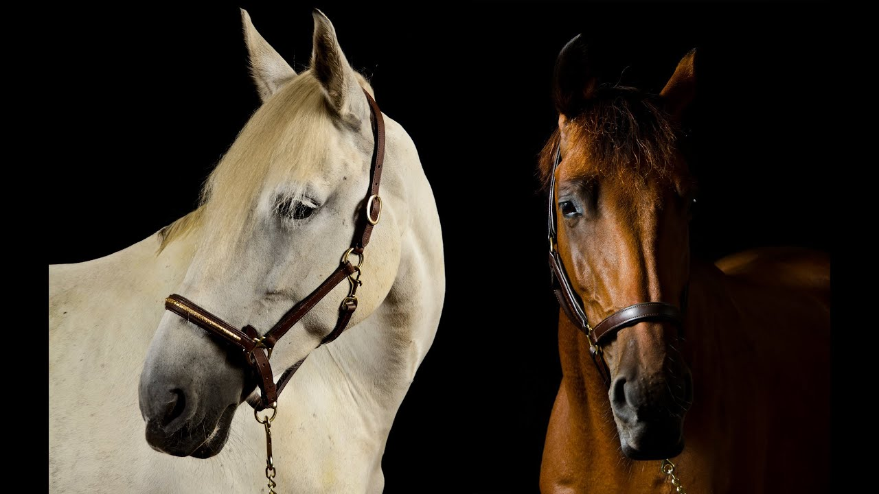 High Quality Horse Photography YouTube