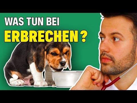 Dein Hund Erbricht?! | TIPPs Gegen Erbrechen Beim Hund