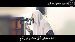 الشيخ محمود هاشم - النملة ماهيش أذكى منك يا ابن أدم