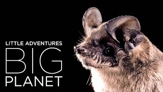 Bracken Cave: Home to the world's largest bat colony