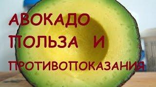 Авокадо - полезные свойства косточки плода, видео