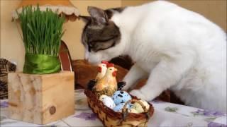 Пока никто не видит . Кот Реми и перепелиные яйца.