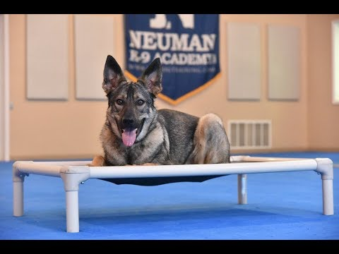Odin (German Shepherd Mix) Boot Camp Dog Training Video Demonstration