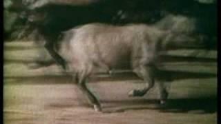 1964-1/2 Ford  Mustang orginal TV Commercial