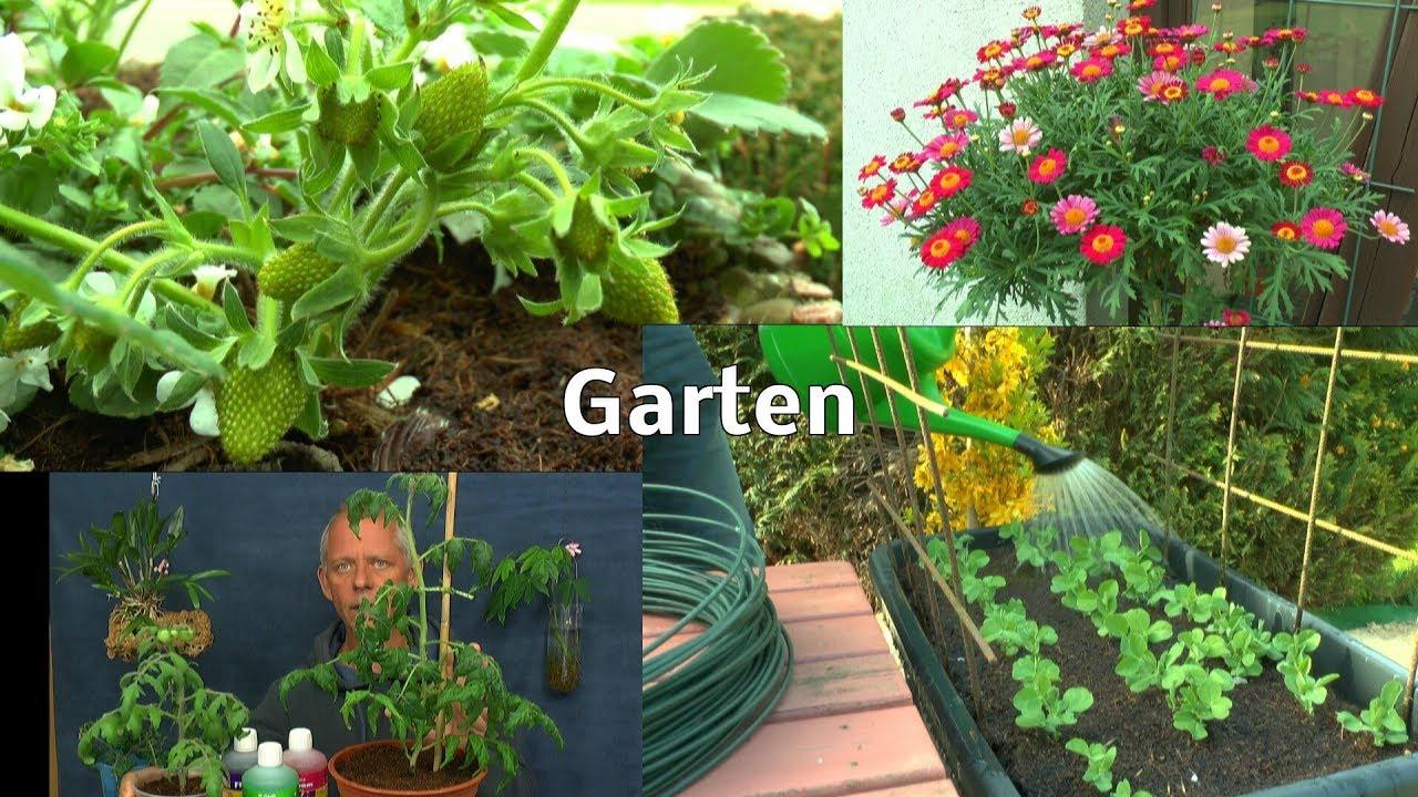 Gemuse Im Hochbeet Aussaat Salat Und Zucchini Draussen Tomaten Im