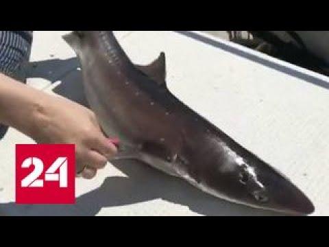 Купающихся на пляжах Приморья распугали акулы