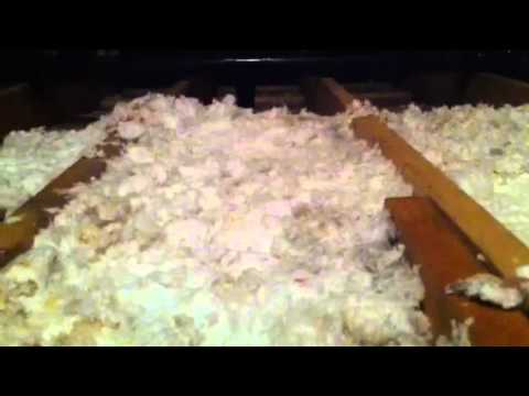 how-we-remove-blown-in-insulation-with-the-new-nikro