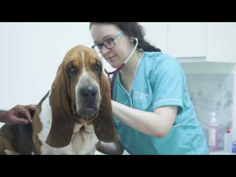 DOG HEALTH PROBLEMS- THE VET ANSWERS