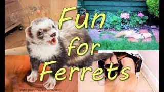 Ferret ENRICHMENT - 12 Easy, cheap, fun ideas!