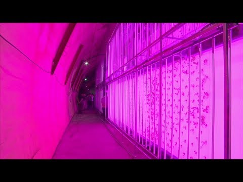 World's first indoor vertical farm to be built in a tunnel