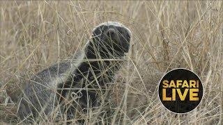 safariLIVE- Sunrise Safari - July 6, 2018 thumbnail