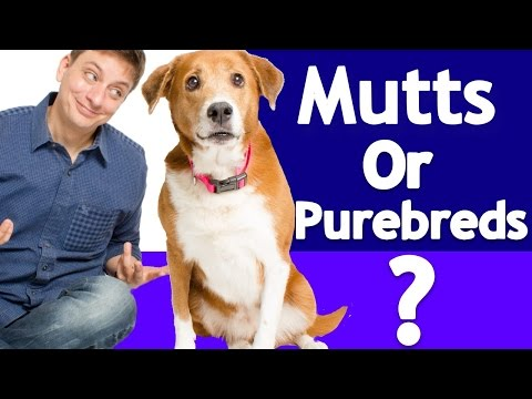 *NEW* Which is better? Purebred or Mixed breeds? The Answer is in the DNA!