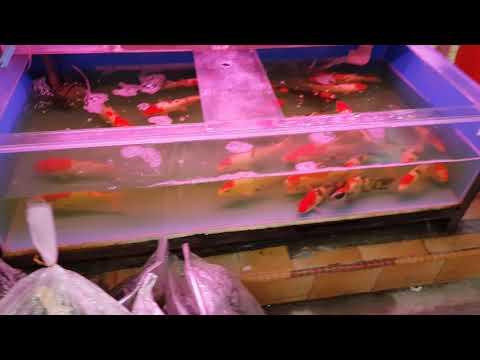 Singapore Aquarium Fish Shops - Part 3/3