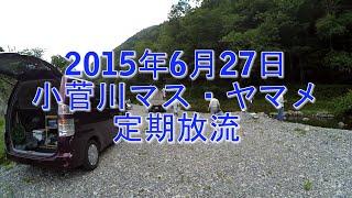2015年6月27日 小菅川のマス・ヤマメの定期放流に行ってきました。 マス...