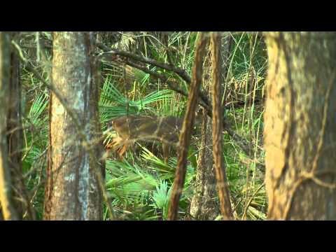 Hunting Late Season Whitetail Deer In LA -Truth About Hunting