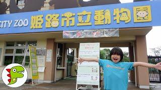 おでかけ 姫路市立動物園!どんなどうぶつがいるかな? トイキッズ