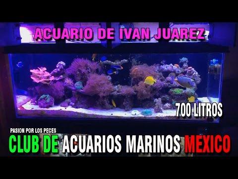 """CamMx : Acuario de Ivan Juarez """"700 Litros"""""""