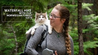 Waterfall Hike in Oregon with our Norwegian Forest Cats