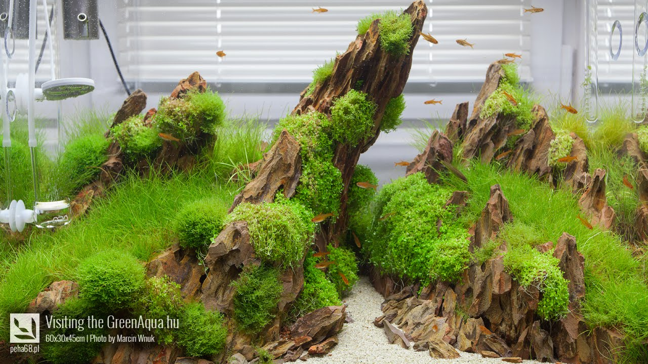 Green Aqua   Aquascaping Gallery   YouTube