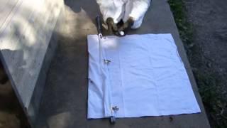 きもい・・・ 閲覧注意  昆虫編 吸血昆虫マダニ !! 犬の体表でマダニが(薬剤の効果で)いやがって足をバタバタさせる様子です。(バイエル薬品提供)