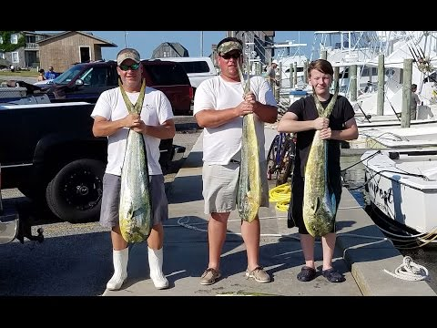 Catching Dolphin Offshore Hatteras