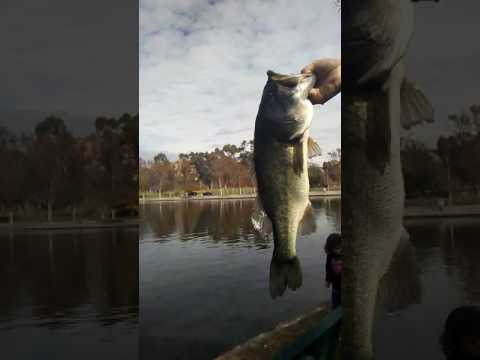 Socal Bass Fishing. Orange County. Ralph B Clark Park Lake. Regional Park O.c Oct/28/2016