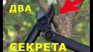 Обрезка деревьев ВЕСНОЙ. Два основных правила обрезки дерева / Pruning trees