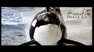 Kasatka - Hold on