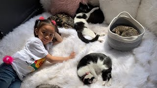 I ADOPTED 100 CATS !!!