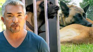 Cesar Millan Helps Returned Dog Who Won't Stop BITING Itself