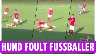 "Irre Szene in Rumänien   Hund ""foult"" Fußballspieler"
