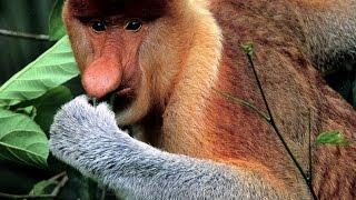 Самые необычные животные мира Топ15
