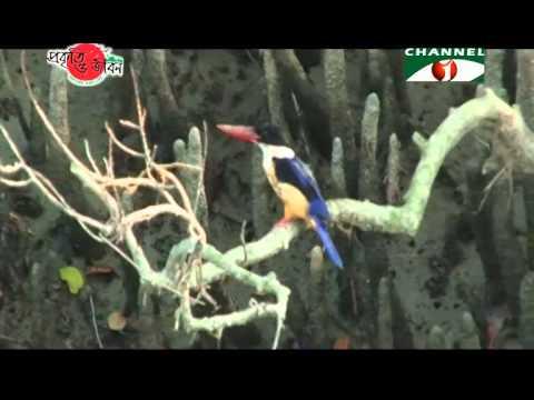 Nature and Life - Episode 185 (Wildlife Sanctuaries of Sundarbans)