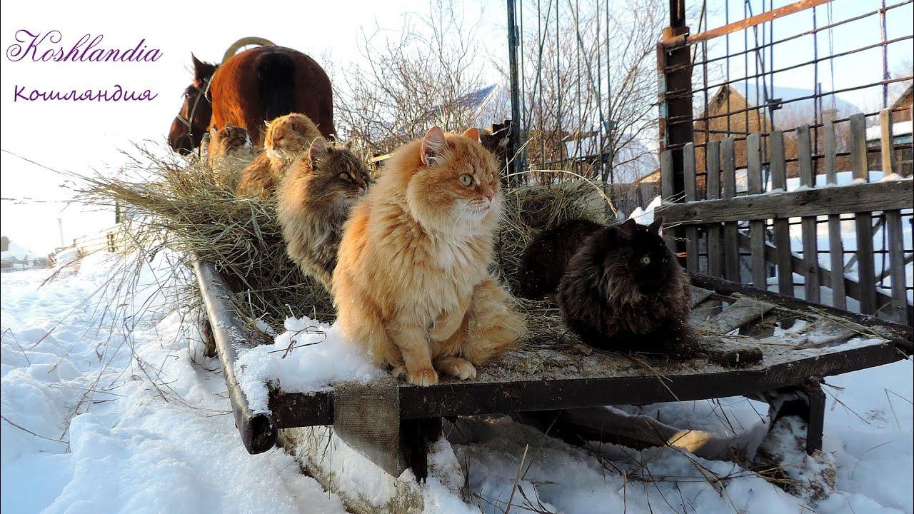 Коты фото зимой