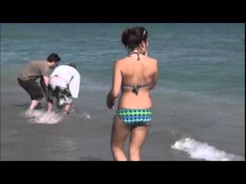 Thumbnail: FLORIDA SHARK ATTACKS IN BROAD DAYLIGHT 5 FEET FROM SHORE FLORIDA BEACH