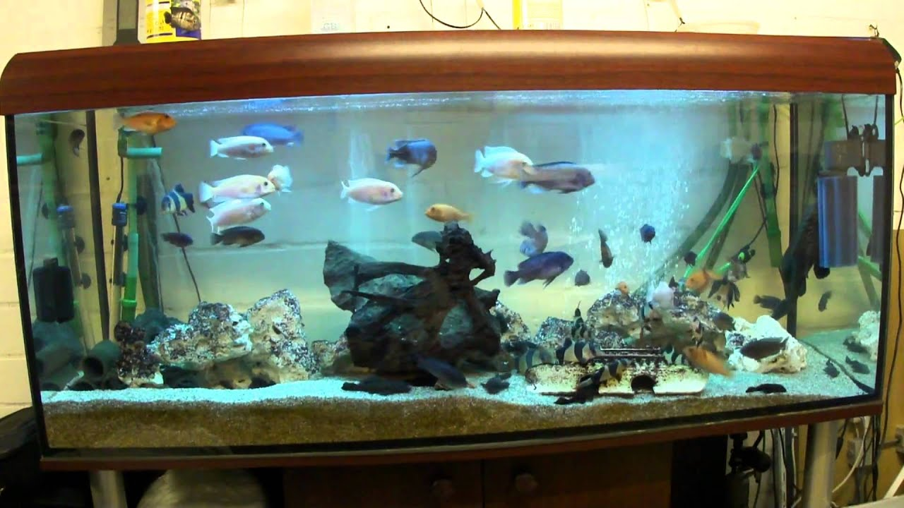 mein 450 liter aquarium neu gestaltet 2 youtube. Black Bedroom Furniture Sets. Home Design Ideas