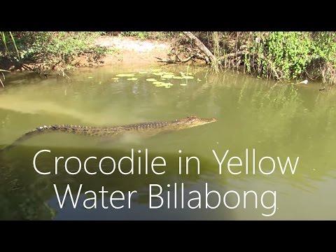 Crocodile in Yellow Water Billabong, Kakadu National Park, Australia