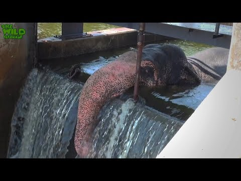 Elephant rescue mission: STUCK ON A DAM!