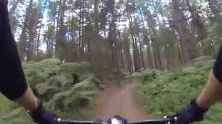 Redwoods Of Rotorua - The Dipper