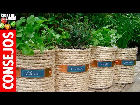 Como cultivar tomillo - Guía completa sobre el cultivo Exterior, Interior, Cuidados - 1