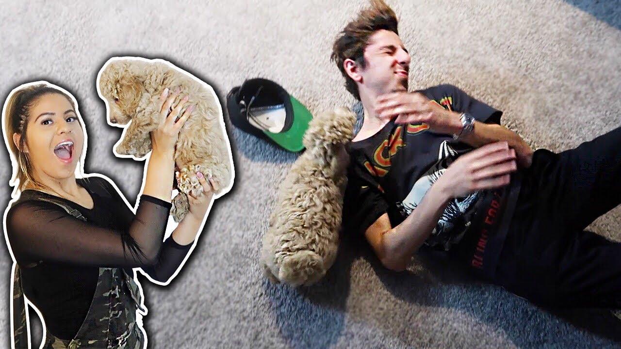 New dog ATTACKS FaZe Rug SURPRISING JACKIE  YouTube