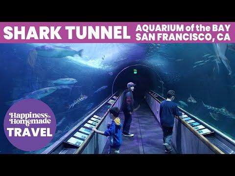 Shark Tunnel - Aquarium of the Bay, San Francisco, California