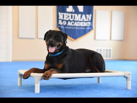 Tank (Rottweiler) Advanced Dog Training Demonstration