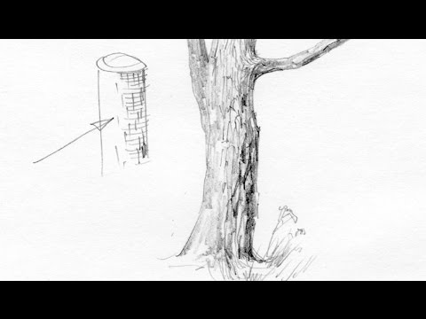 Как рисовать ствол дерева