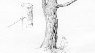 Как нарисовать кору дерева? Художник: Алексей Епишин. Рисунок карандашом.(Как научиться рисовать лес? В рисунке леса важно правильно передавать форму веток и ствола дерева, фактуру..., 2015-10-09T17:55:13.000Z)