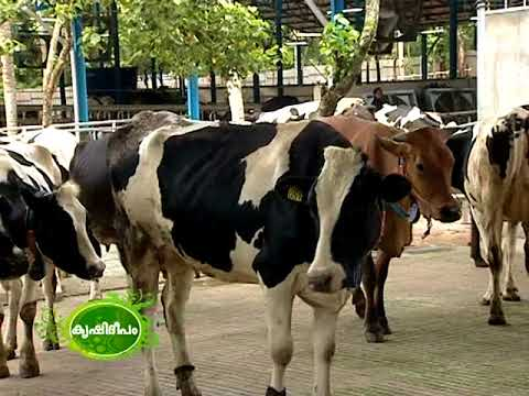 JK Farms Dairy  Kollam