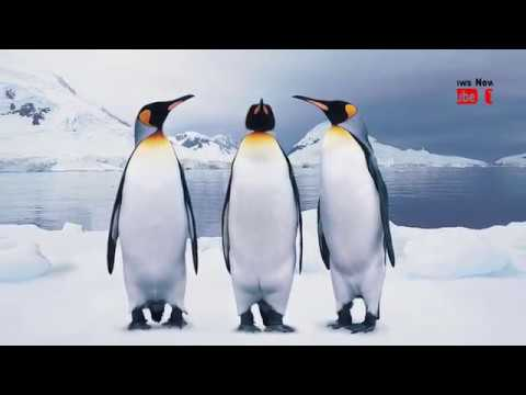 Penguins die in 'catastrophic' Antarctic breeding season