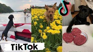 Funny Dogs Doing Things Tik Toks ~ Cute Puppies TIKTOK Compilation   2020