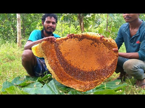 Worlds Biggest Honeycomb Harvest | Harvesting And Eating Honeycomb | Honey Hunting Video In India